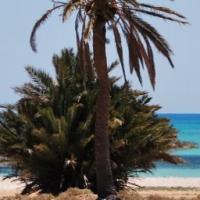 djerba plage mer et palmier -copyright.jpg