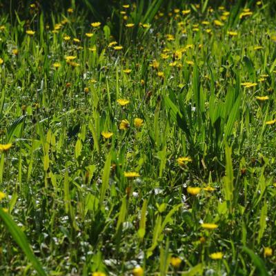 Fleurs sauvages du jardin