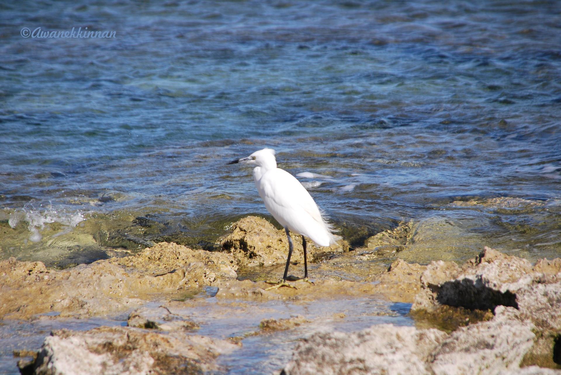 Rencontre femme aujourdhui for Oiseau gris et blanc